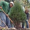 10 plantas Landscaping