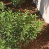 12 variedades de plantas y sus zonas