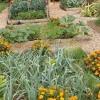Bloquear plantar verduras en camas