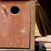 La construcción de una casa para pájaros