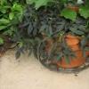 Jardinería en contenedores