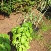 Crecer una frontera hierba