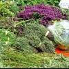 Cultiva tus propias hierbas