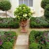 Cultivo hortensias en macetas