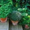 El cultivo de hortalizas en recipientes