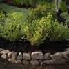 ¿Cómo construir un jardín de la baya-cama elevada