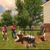 Cómo cuidar a un nuevo árbol