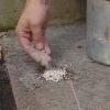 Cómo limpiar concreto