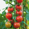 Cómo crecer las hortalizas de fruto