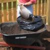 Cómo cultivar papas en una bolsa de basura
