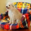 Cómo hacer una cama para mascotas de una silla de oficina