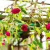 Cómo hacer rosas de papel crepé y ramas que cuelgan