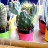 Cómo hacer mini lindo favores del partido de cactus