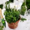 Cómo hacer centros de mesa pot hierba y los favores del partido
