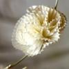 Cómo hacer flores de papel utilizando revestimientos de la magdalena o filtros de café