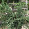 Cómo plantar un seto