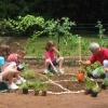 Cómo plantar un jardín de pizza