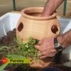 Cómo plantar macetas de hierbas