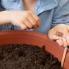 Cómo plantar rábanos