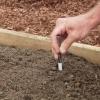 Cómo plantar calabaza de verano