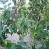 Cómo podar árboles y arbustos
