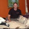 Cómo quitar las manchas de mascotas de las alfombras
