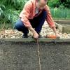 Cómo sembrar semillas de remolacha fuera
