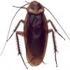 Identificar, eliminar y prevenir la infestación de insectos y animales