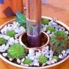 Jell-o molde plantador