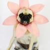 Haga una flor traje de halloween para un perro