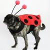 Hacer una mariquita traje de halloween para un perro