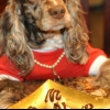 Mantequilla de maní sueño hincha golosinas para perros