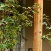 Plantas en un pequeño jardín urbano