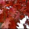 Las plantas con interés caída: mantener el color que viene