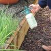 La protección de las plantas de cebolla