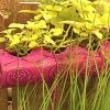 Pvc plantador