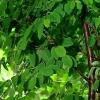 Plantas tolerantes a la sombra