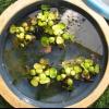Los fundamentos de jardines de agua