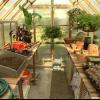 Consejos para organizar un invernadero