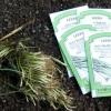 Consejos sobre el crecimiento puerros, cebolletas y cebollino