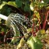 Jardinería-Agua sabia