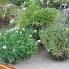 Las malas hierbas como advertencias