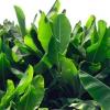Plantas tropicales resistentes al invierno