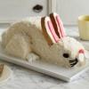 100 Fácil y deliciosas golosinas de Pascua y Postres