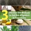 3 Métodos eficaces de bricolaje para deshacerse de las arañas en su hogar