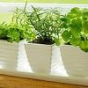 Jardines del patio trasero libre: cómo crecer sin espacio