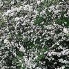 Nupcial ofrenda floral