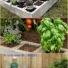 Brillante Proyecto Jardinería: Cómo hacer un jardín cama levantada mediante bloques de cemento