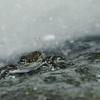 ¿Puede realmente llover ranas?