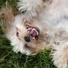 ¿Pueden las mascotas te hacen feliz?
